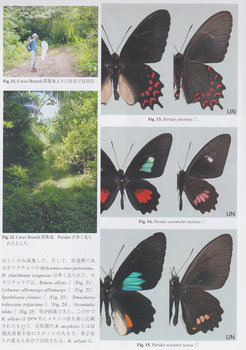 Belize butterflies.jpg