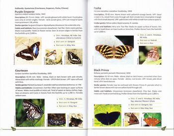 Butterflirs of the Garo Hills content.jpg