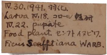 Euploea algea label.JPG