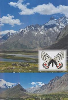 Himalaya Parnassius.jpg