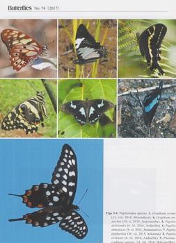 Madagascar butterflies .jpg