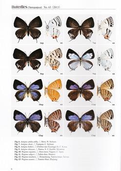 New Zephyrus No.63.jpg