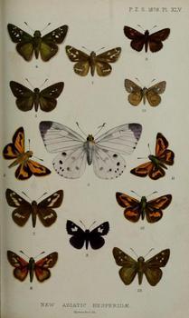 pieridoides Plate.jpg