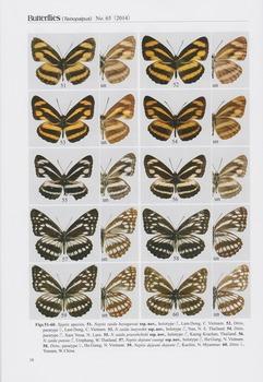 Indochina Limenitidinae.jpg